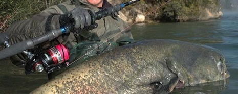 Pesca de siluro